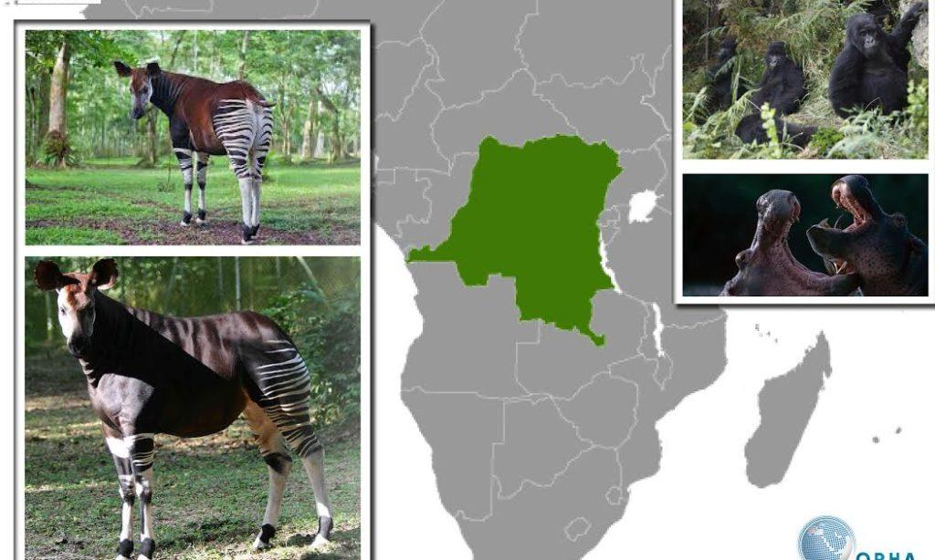 Demokratik Kongo Cumhuriyeti'nin Doğal Parkları