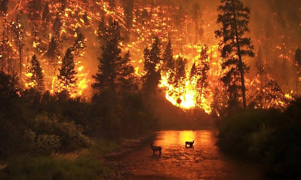 Sibirya yangınları: ölümcül tehlike